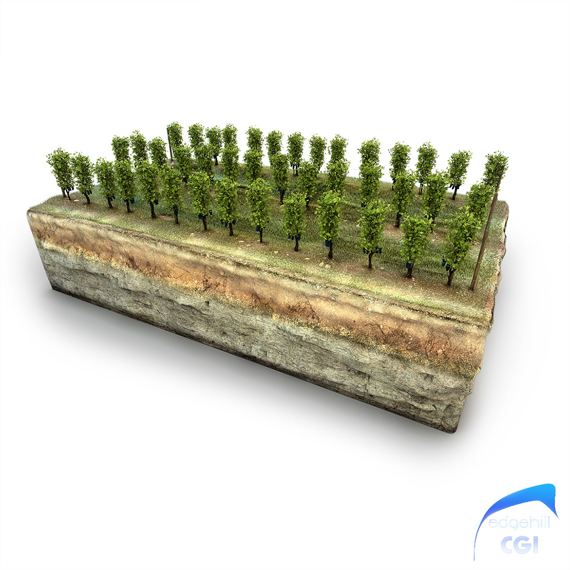 Vineyard Diorama Edge Hill CGI