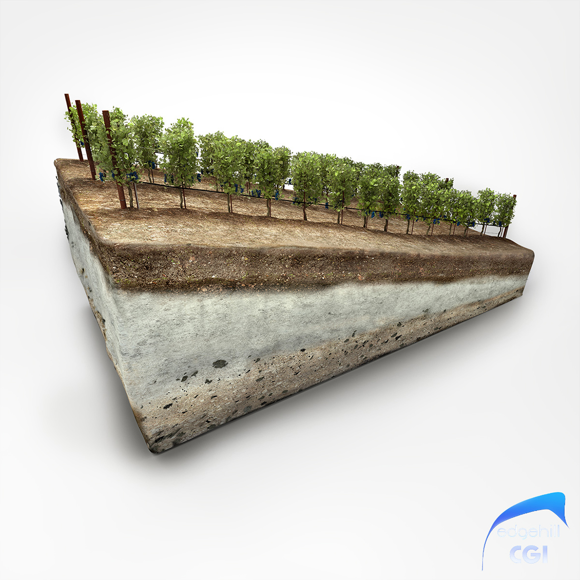 Vineyard Diorama 3D 2